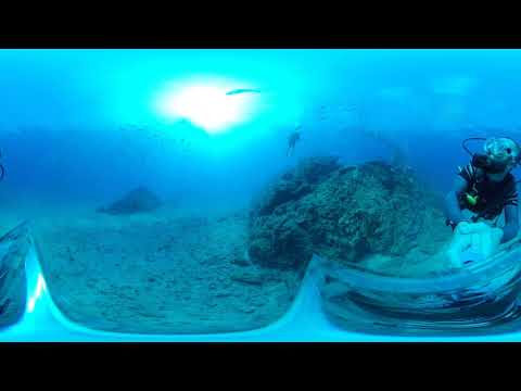 Scuba diving with reef sharks using the Insta360 One X 360 camera