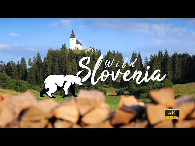 Wild Slovenia Vlog | Bear Photography (SUBS)