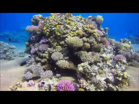 CPG Marine Geology Trip to Red Sea