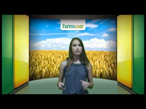 Farms.com Weekly Crop Report: Corn Prices and Ending Stocks