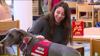 Therapy Dog Helps Relieve Stress, Comfort Students at Ohio High School