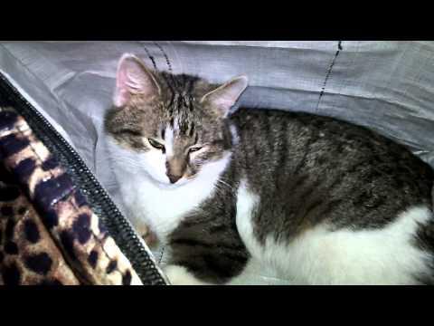 Вопрос: Как отвадить кота от привычки спать в сумках?