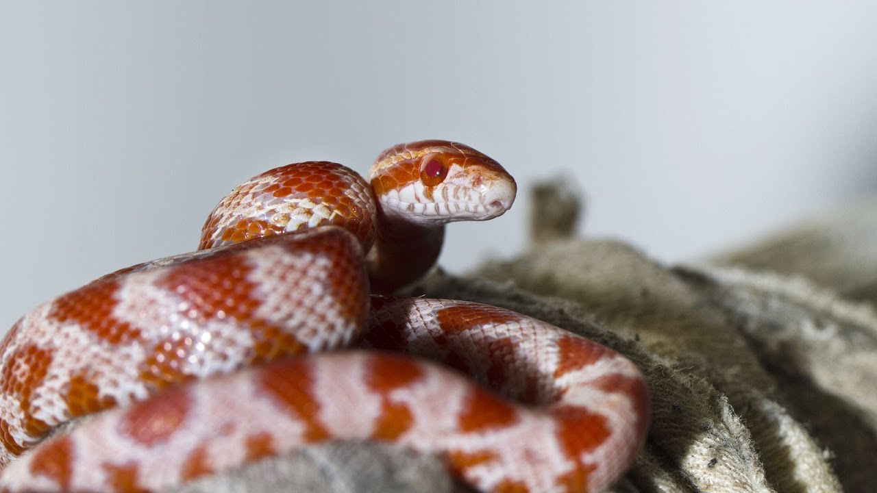 Signs You Should Take Your Snake to a Vet | Pet Snakes