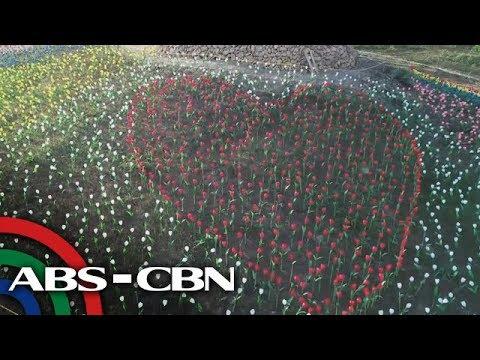Rated K: Layugan Garden 10,000 Tulips sa Bucay, Abra