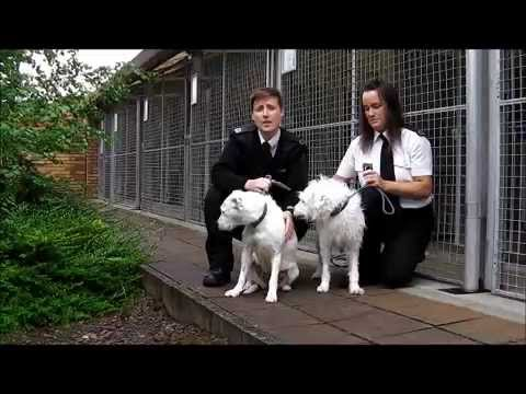 Support Adoption For Pets Please Help The Scottish SPCA Refurbish Dog Kennels