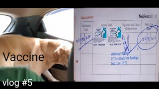 # vlog 5 - Oscar gets his last vaccine of the year   Oscar ko lagi last vaccine    Oscar the lab.