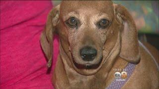 Dogs Attacked By Rattlesnake In San Bernardino