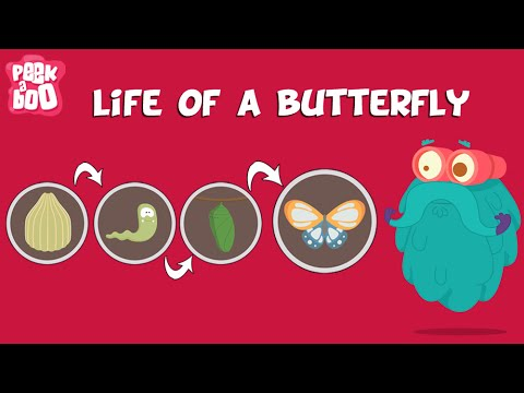 Life Of A Butterfly | The Dr. Binocs Show | Learn Videos For Kids