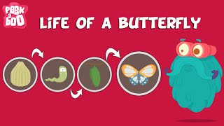 Life Of A Butterfly | The Dr. Binocs Show | Learn Series For Kids