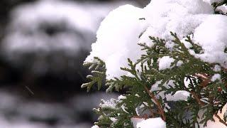 видео Температура погоды, воздуха и воды 3, 7, 10, 14 дней, месяц
