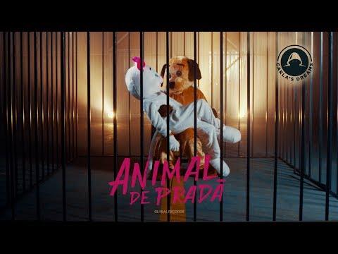 Carla's Dreams - Animal de Prada | Official Visualizer