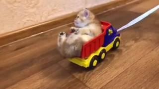 Kitten in a toy car