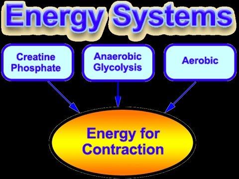 אנרגיה קריאטין