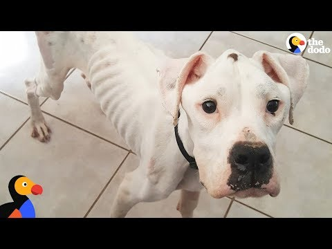Sick Stray Dog Transformed by Incredible Couple | The Dodo