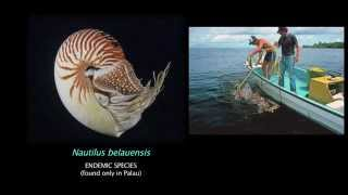 Nautilus Research - Palau 2015