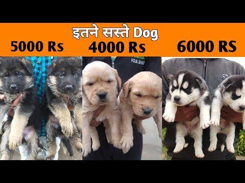 Very Low Price Dog  /  Dogs Price List In India / CHEAP DOGS MARKET / DOGS IN CHEAP PRICE