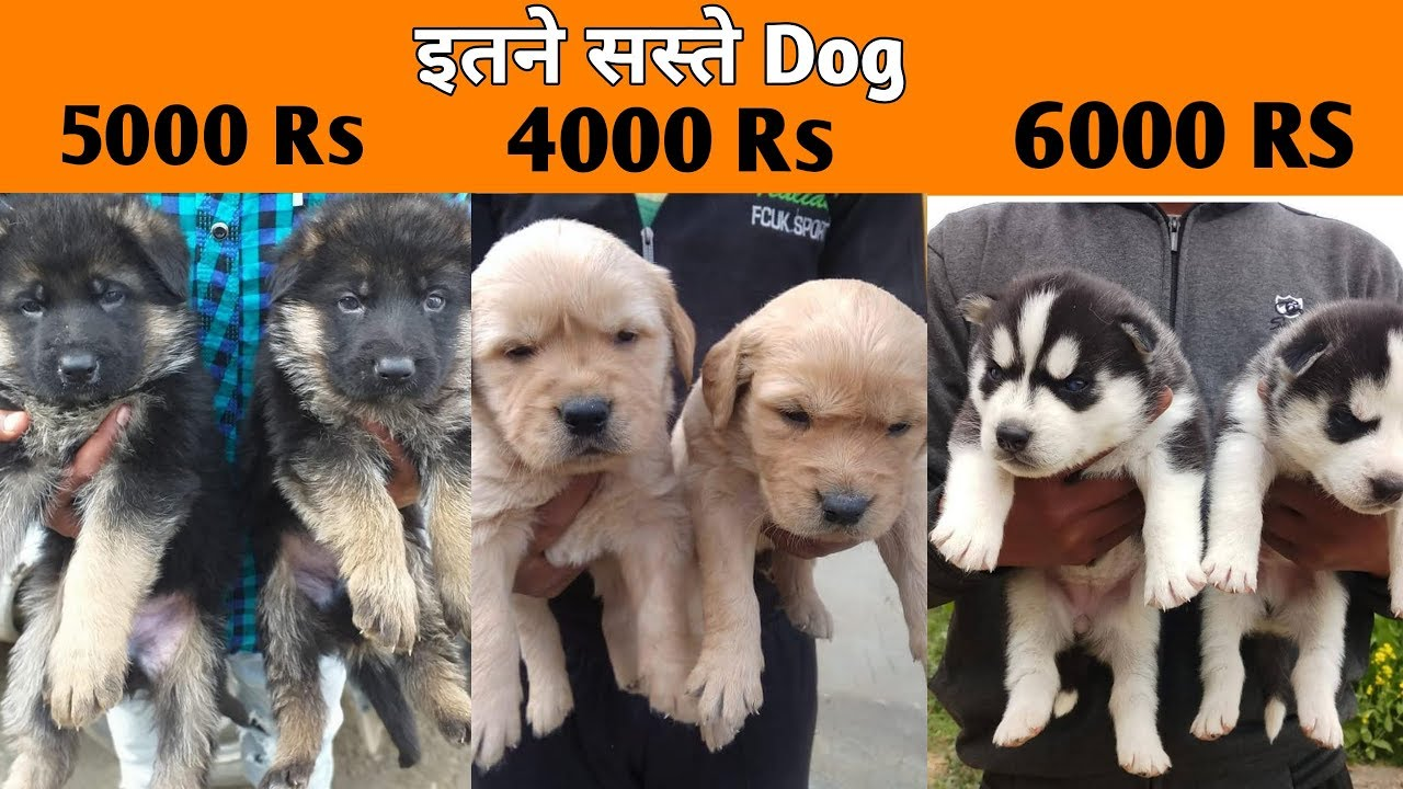 Very Low Price Dog Dogs Price List In India Cheap Dogs Market