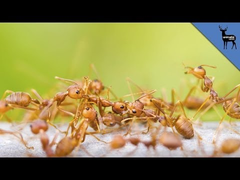 What Ants Do to Other Dead Ants
