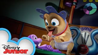 Young Pups | Puppy Dog Pals Puppy Playcare | Disney Junior
