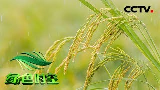 【Green Agriculture】20171203 | CCTV Agriculture