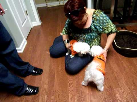 lilo ollie and ivy maltese halloween costumes