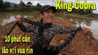 Cuộc Rượt Đuổi Nghẹt Thở Truy Bắt Vua Rắn| king Cobra | SBATVC