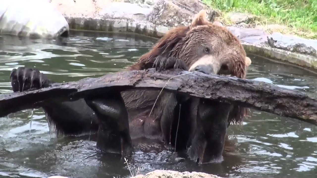 Tiergarten Bernburg - YouTube