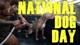 NATIONAL DOG DAY  ft |Fashionnova|