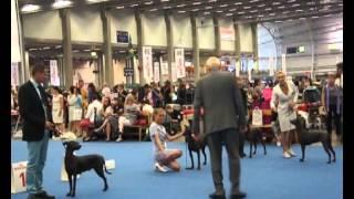 World Dog Show 2014, Xoloitzcuintle Standard Females.
