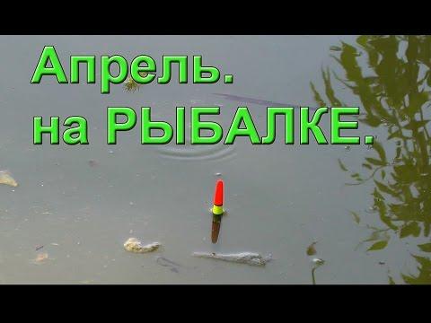 ловля красноперки в апреле на поплавочную удочку
