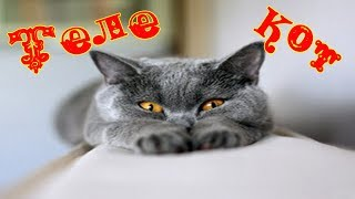 Котёнок телезритель. Из Новосибирска с любовью!