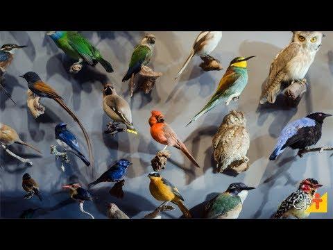 Clique e veja o vídeo Curso Taxidermia - Empalhamento de Aves e Mamíferos CPT