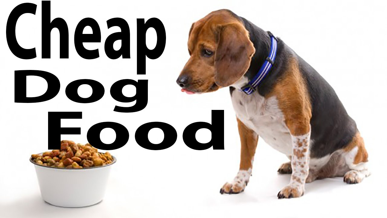 Best Dog Food Reviews Cheap Dog Food Online Purepetfood Com Uk