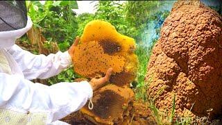 Captura de abelhas APIS em Cupinzeiro