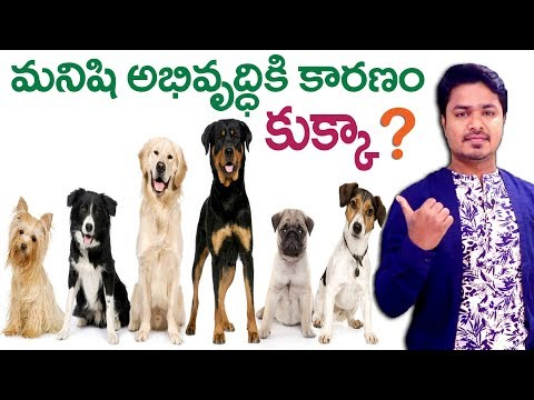 The Bond Between Dogs and Humans | Vikram Aditya Latest Videos | EP #155 | Vikram Aditya