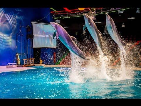Image result for Dubai Dolphinarium