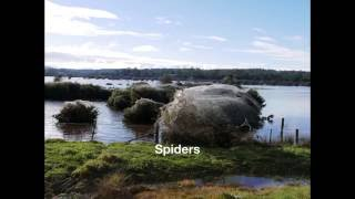 Incredible Spider Swarm following Tasmanian Floods June 2016