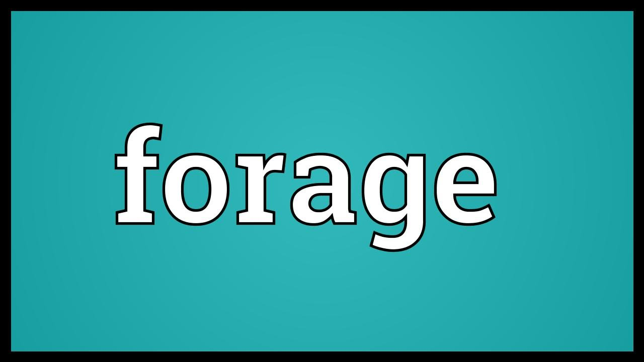 Forage Meaning