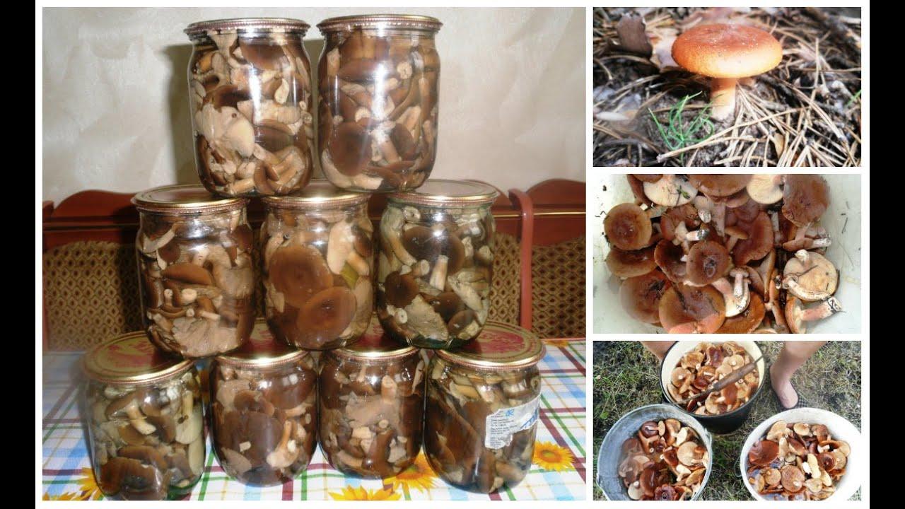 горькушки грибы фото