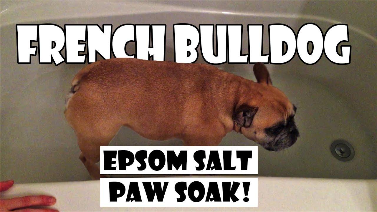 How to french bulldog epsom salt bath soak funnydog tv for Epsom salt in french