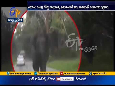 Elephant Chasing A Car At Mudumalai Forest Karnataka