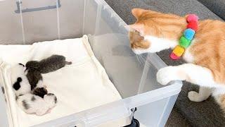 赤ちゃん猫を初めて見た先住猫の反応