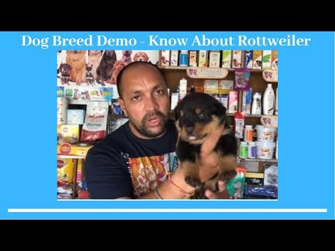 Dog Breed Demo - Know About Rottweiler - Bhola Shola