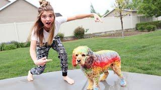 Rainbow Dog! Coloring Logan With Chalk
