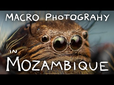 Macro Photography in Mozambique! HUGE Jumping Spiders! Stalk-Eyed Flies! Camel Spiders!