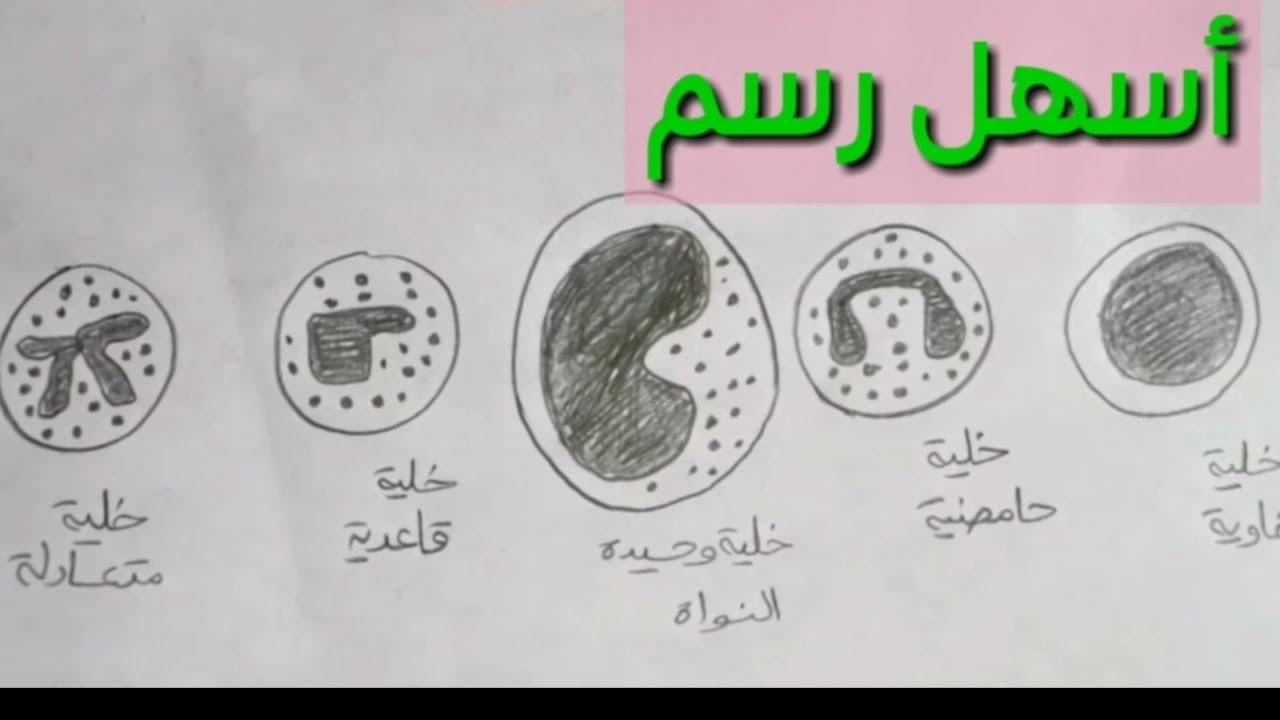 رسم أنواع خلايا الدم البيضاء بطريقة مبسطة Youtube