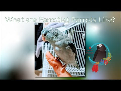 What are #Parrotlet