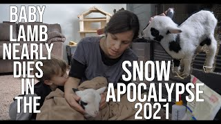 Baby Lamb Nearly Dies In The Snow Apocalypse 2021/House burns down in Texas Winter Storm