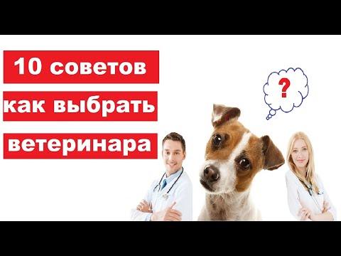 Хороший ветеринар. Как выбрать ветврача?