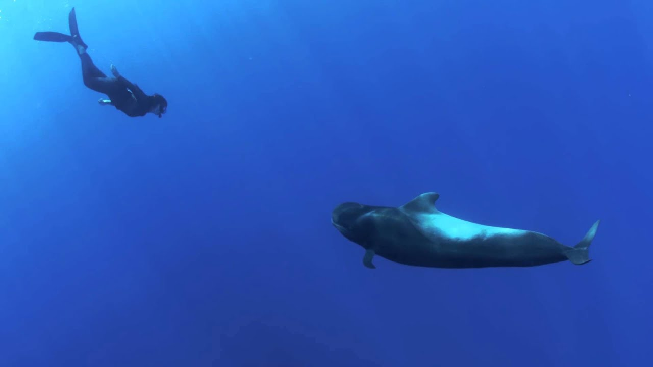 Dolphin Embassy.  MY PILOT, WHALE - teaser trailer